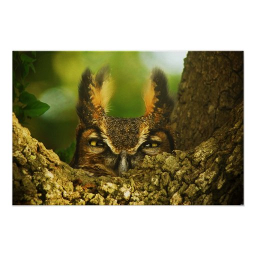 Female Great Horned Owl Posters