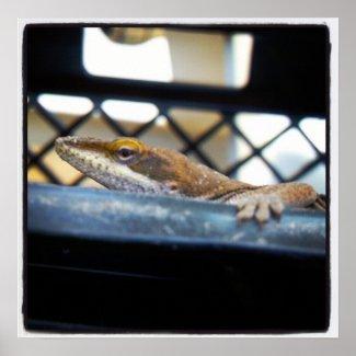 Female Green Anole Lizard Photo