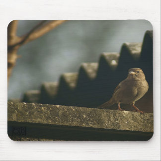 Female House Sparrow Mouse Pads