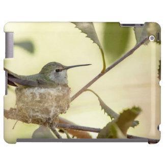 Female hummingbird on her nest