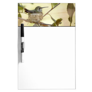 Female hummingbird on her nest dry erase board