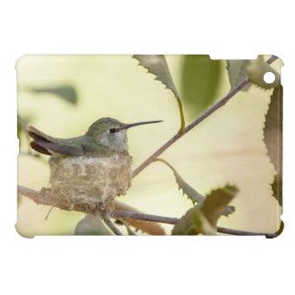 Female hummingbird on her nest iPad mini cover