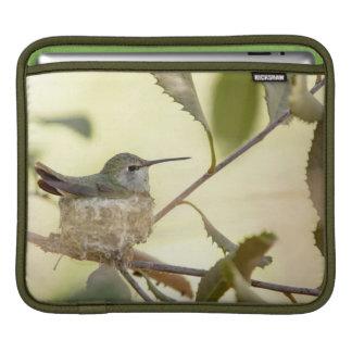 Female hummingbird on her nest iPad sleeves