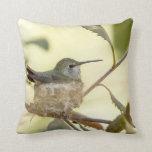 Female hummingbird on her nest pillow