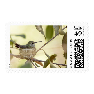 Female hummingbird on her nest stamps