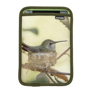 Female hummingbird on her nest sleeve for iPad mini