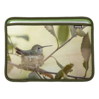 Female hummingbird on her nest sleeve for MacBook air