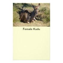 Female Kudu Flyer