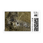 Female Leopad - Karula and son Postage Stamp