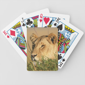 Female Lion Bicycle Playing Cards