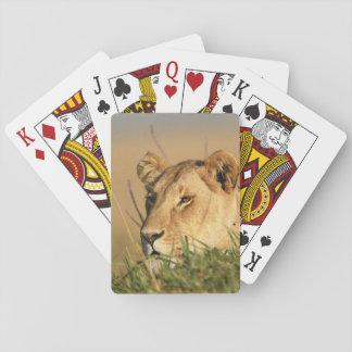 Female Lion Card Decks