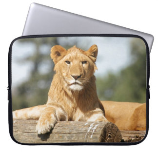 Female Lion Computer Sleeves
