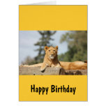 Female Lion Greeting Card
