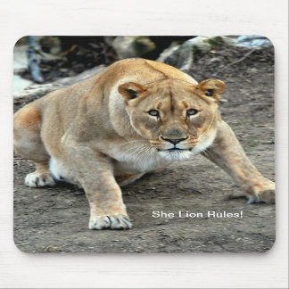 Female Lion - Lioness stare down Mouse pad