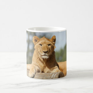 Female Lion Mugs