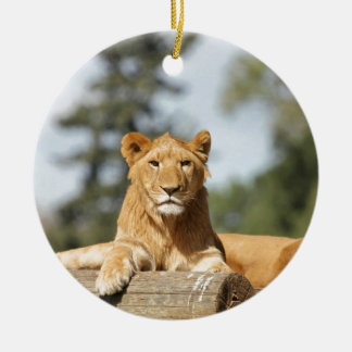 Female Lion Ornament