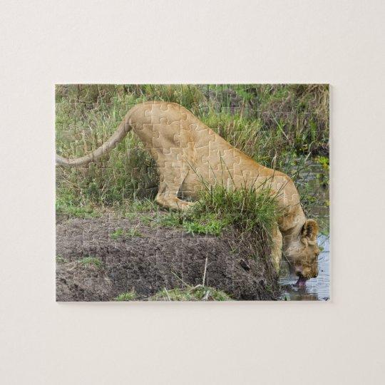 Female lion (Panthera leo), Masai Mara National Jigsaw Puzzle