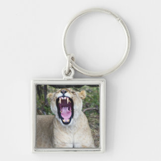 Female lion (Panthera leo), Masai Mara National Keychain