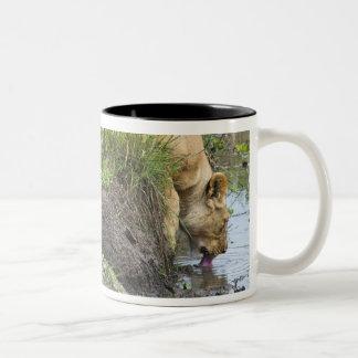 Female lion Panthera leo Masai Mara National Coffee Mug