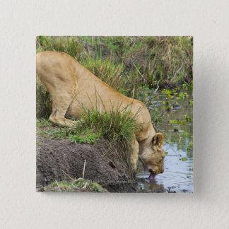 Female lion (Panthera leo), Masai Mara National Pinback Button