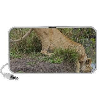 Female lion (Panthera leo), Masai Mara National Mini Speakers