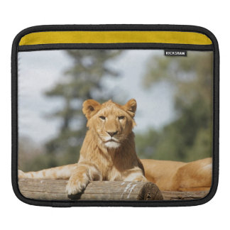 Female Lion Sleeve For iPads