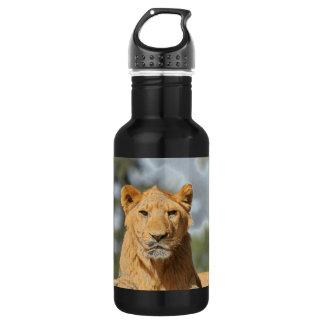 Female Lion Stainless Steel Water Bottle