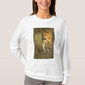 Female Lion walking at sunset, Masai Mara, T-Shirt
