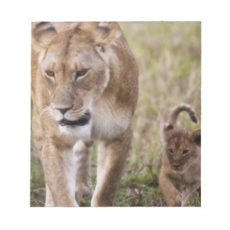 Female Lion with cub (Panthera Leo) as seen in Notepad