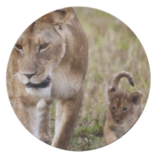 Female Lion with cub (Panthera Leo) as seen in Plate