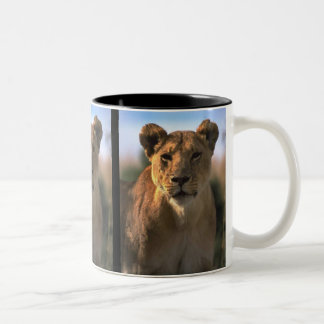 Female Lioness Lion Lovers Gifts Mugs