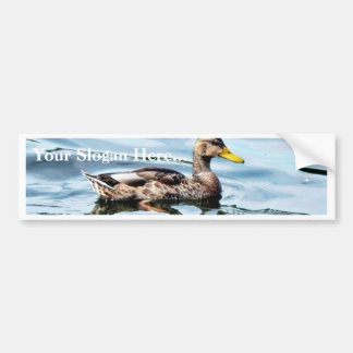 Female Mallard Bumper Sticker