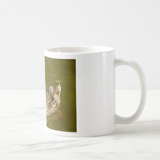 Female Mallard Classic White Coffee Mug