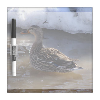 Female Mallard Dry-Erase Boards