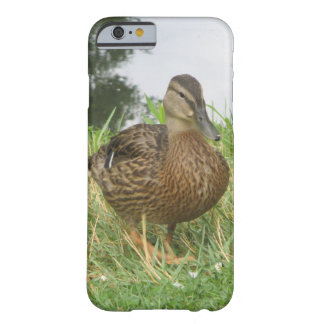 Female Mallard Duck Barely There iPhone 6 Case