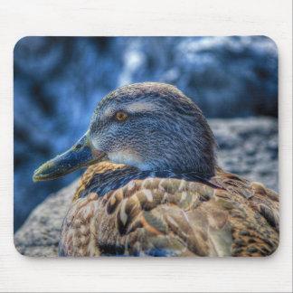 Female Mallard Duck Birdlover Wildlife Portrait Mouse Pad