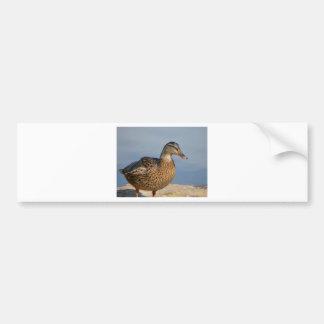 Female Mallard Duck Bumper Sticker