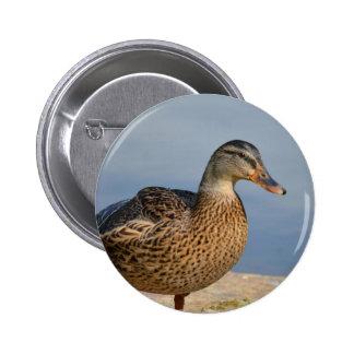 Female Mallard Duck Button