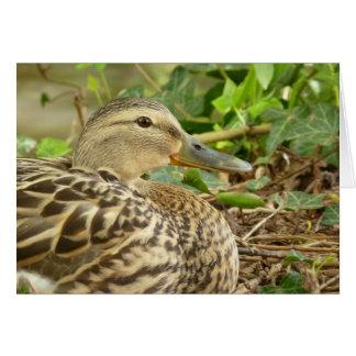 Female Mallard Duck Card