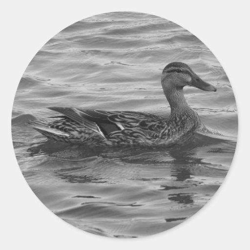 Female Mallard Duck Classic Round Sticker