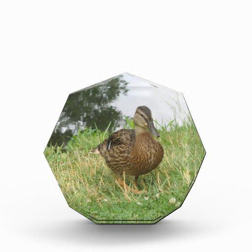 Female Mallard Duck Decoration Award Zazzle