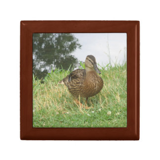 Female Mallard Duck giftbox Trinket Box