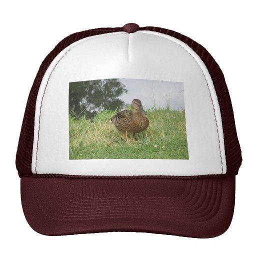 Female Mallard Duck Hat