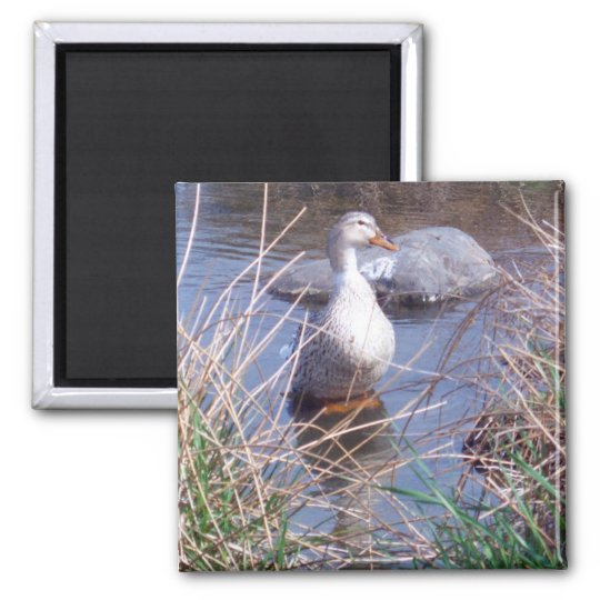 Female Mallard Duck Magnet