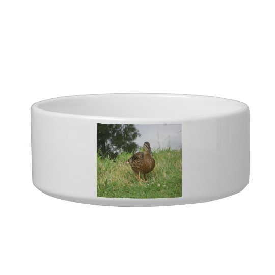 Female Mallard Duck Pet Bowl