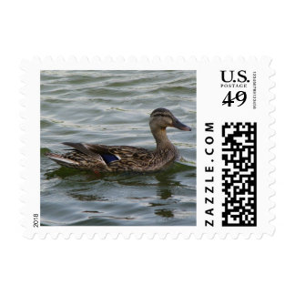 Female Mallard Duck Postage