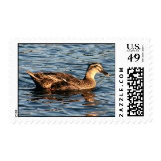 Female Mallard Duck Postage Stamp
