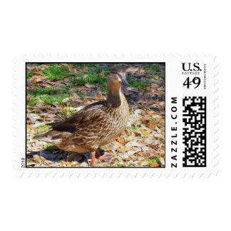 Female Mallard Duck Postage Stamps