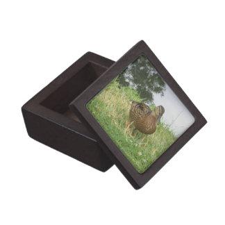 Female Mallard Duck Premium Gift Box