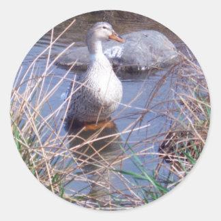 Female Mallard Duck Sticker